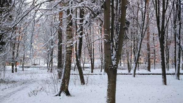 Квартира с видом на лес