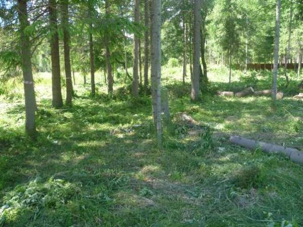 Расчистка участка от кустарника, вырубка (спил) деревьев. Снос дома.