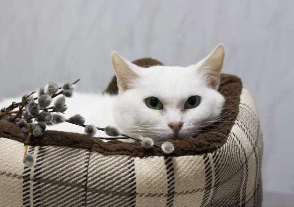 Прекрасная кошка по имени Сага в добрые руки! в Москве фото 6