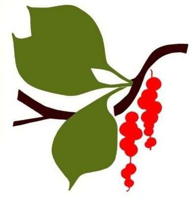 Лекарственные растения Дальнего Востока