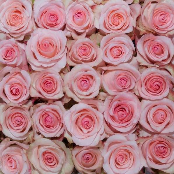 Цветы напрямую от плантаций Эквадора от 1 коробки в Москве фото 14