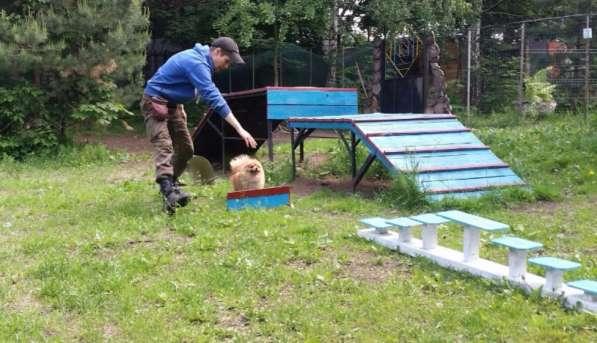 Передержка и дрессировка собак в Раменское фото 20