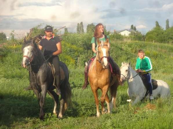 Прогулки на лошадях в Воронеже фото 6