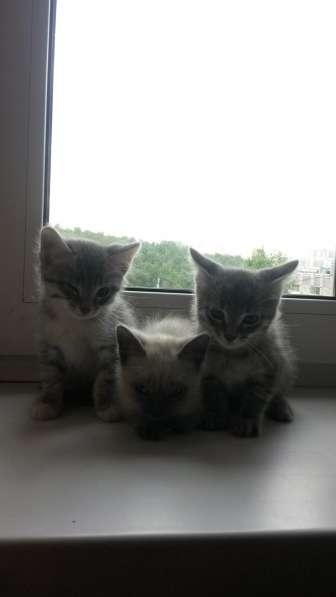 Дарим котят, симпатичные, чистоплотные, самостоятельные