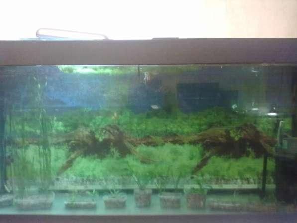 Продам аквариум на 500 литров