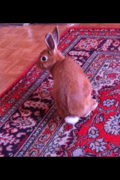 Продажа кролика