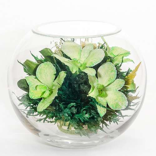 Орхидеи зелёные в стекле