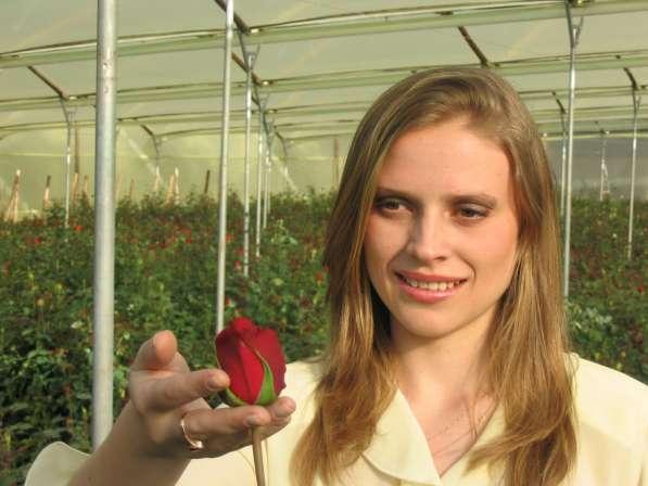 Цветы напрямую от плантаций Эквадора от 1 коробки в Москве фото 20