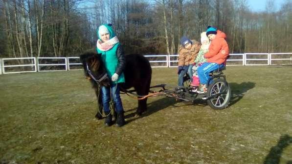 Туры для детей на пони ферму. Полесск.