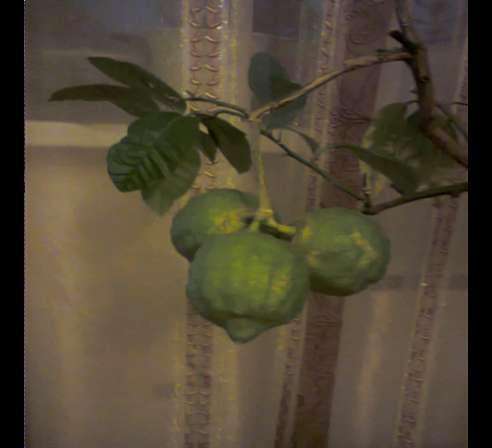 Лимон домашний в Одинцово фото 8