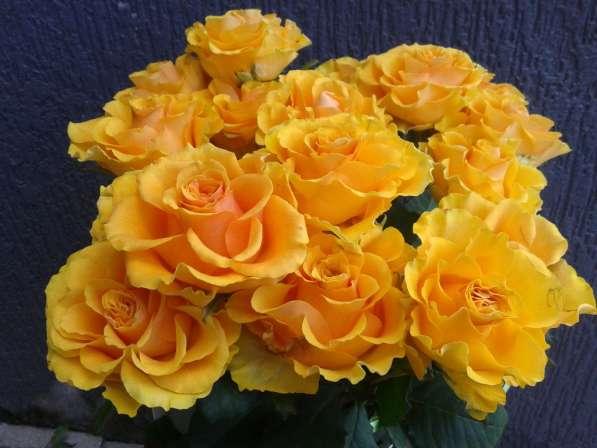 Срез для букетов (розы) в Ростове-на-Дону фото 3