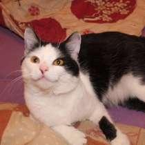 Кошка для одинокого человека в дар, в г.Гомель