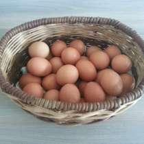 Яйцо куриное деревенское крупное, в Подольске