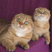 Две кошечки - сестренки Мигуми и Мицуки - в хорошие руки, в Казани