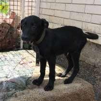 Черный щенок, в г.Краснодар
