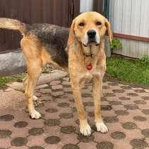 Добрый и дружелюбный молодой пес Мухтар в добрые руки, в г.Москва