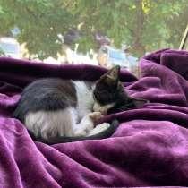 Черно-белый котенок, в г.Краснодар