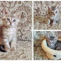 Очаровательные котята-малыши Тиша, Ника и Мика в добрые руки, в г.Москва
