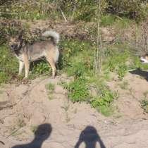 Выгул собак, в Перми