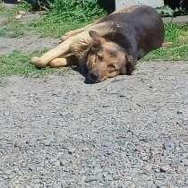 Ищем заботливого хозяина для собачки, в Красноярске