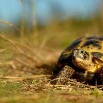 Передержка сухопутных черепах, в Москве