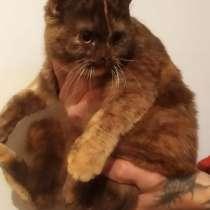 Кошка Соня, в г.Краснодар
