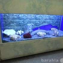 Морские раковины, в г.Челябинск