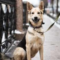 Пёс-джентльмен ищет дом, в Санкт-Петербурге