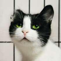 Кошка Джини ищет дом, в Москве