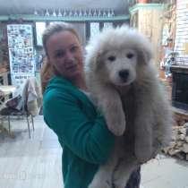 Маремма абруцкая овчарка, в Челябинске