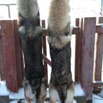 Чехословацкая волчья собака – успейте зарезервировать щенка, в Москве