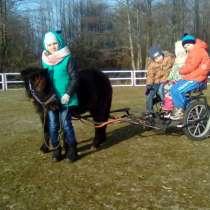 Туры для детей на пони ферму. Полесск., в Калининграде