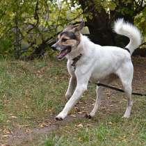 Молодой, крупный, воспитанный пес Тарзан в добрые руки, в Москве