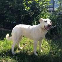 Белая собачка, в г.Краснодар