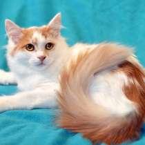 Кругленький и пушистый кото-принц Хайп ищет дом, в г.Москва