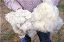 Овечья шерсть обработанная, в Казани
