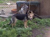 Отдам даром Молодая собачка в добрые руки., в Челябинске