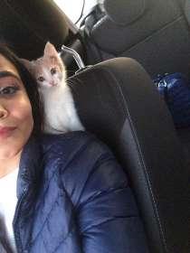 Отдам котёнка в добрые руки, в Казани