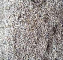 Семена травы, в Екатеринбурге