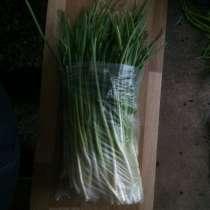 Зелёный лук, в г.Самара