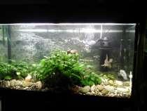 Продается Аквариум (200 л) с рыбами, живыми растениями, в Москве