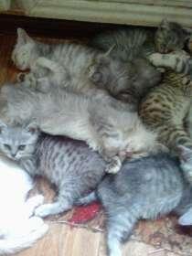 Котики, в Дубне