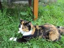 Кошечка 10 лет, в Твери