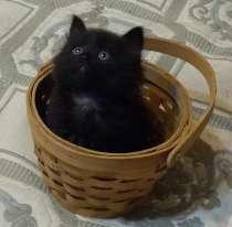 Три чёрных чудесных котёнка хозяев заботливых ждут, в Москве