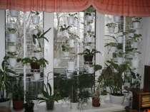 Новые подставки-распоры для цветов, в Санкт-Петербурге