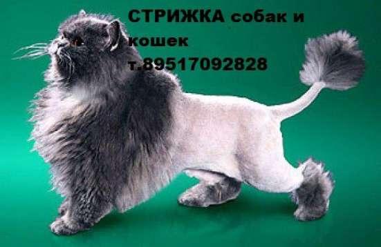Стрижка собак и кошек в Смоленске