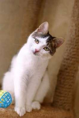 Идеальный кото-ребенок Зайчик ищет дом.