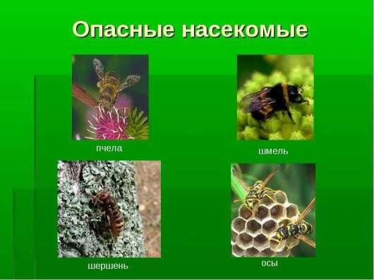 Шершни, осы, тараканы, клещи и скорпионы - Избавим