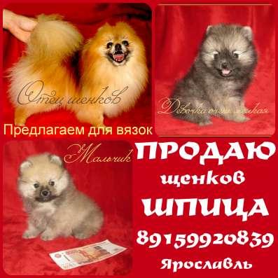 Миниатюрные - померанские щенки шпица
