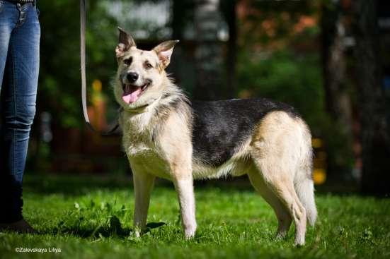 Отдается в дар замечательный пес Норд!